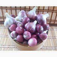 Услуги по сбору урожая чеснока (однозубки)