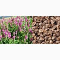Агроцентр семена предлагает посевной материал еспарцета