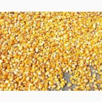 Кукурузу товарную, не классную, отходы.Сою