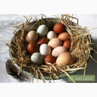 Экологические куриные яйца