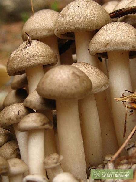 Выращивание грибов в домашних условиях - как вырастить 79