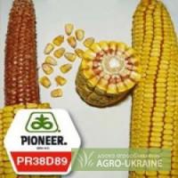 Продам семена кукурузы пионер ANASTA / АНАСТА