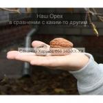 Cаженцы грецкого ореха грецкий орех