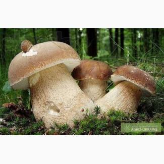 Продам сухие белые грибы с Карпат 2017