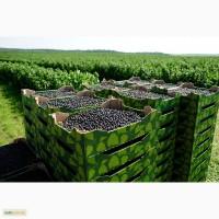 Продам свіжі ягоди