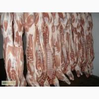 Продам оптом мясо Свинина – Полутуши, Разделка .