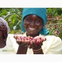 Кофе 100% Арабіка (Камерун) (зелена та смажена). ОПТОМ