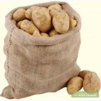 Насіневу картоплю з документами