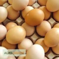 Барська інкубаційна станція надає послуги з інкубіціїї курячого, качиного, гусиного яйця