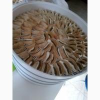 Сушеный гриб Веселка