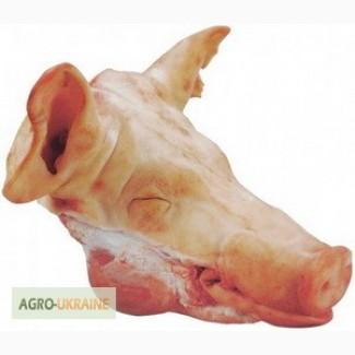 Продам голову свиную маточную