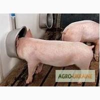 Новые и б/у поилки для свиней