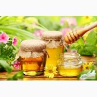 Покупаю мёд, без антибиотика, ДОРОГО