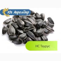 Продам семена подсолнечника НС Таурус Экстра (евролайтнинг)
