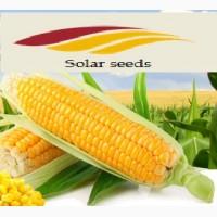 Семена кукурузы Элисон Солар Сидс, ФАО 290 Франция