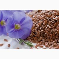Сорт льону олійного Чібік (насіння)