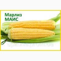Продам гібрид кукурудзи МАРЛІЗ (Маїс, Черкаси) (2017 Р.)
