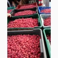 Продам ягоду малини великим тоннажем