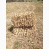 Продам тюковану солому (ячмінну та пшеничну)