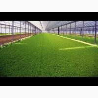 Укроп зелень, продам качественную зелень