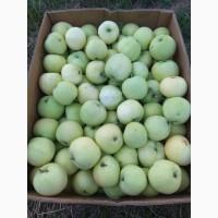 Органічні яблука урожай 2018