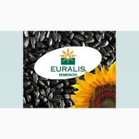 Семена подсолнечника производителя «Евралис»