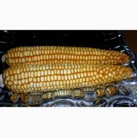 Продам кукурузы от компании экспортера