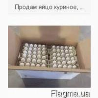 Продам яйцо куриное столовое мелким оптом от 10-100 ящиков+доставка за на счет
