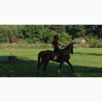 Кінь, вогер, гуцульська порода