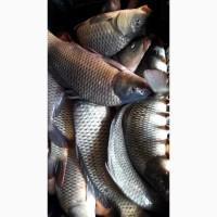 Принимаем заказы на рыбу
