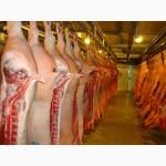 Продаём Мясо Свинина Баранина Гавядина Опт Розница