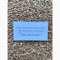 Пшеница продовольственная 3 класс, ячмень, Рожь, кукуруза