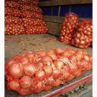 Продам лук херсонский - супер качество