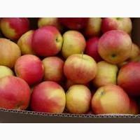 Продам яблука Голден та Айдаред