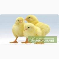 Продам цыплят-бройлера с доставкой. +79 78 70 555 72