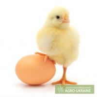 Яйца оптом ,мелким оптом и в розницу с бесплатной доставкой