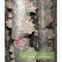 Продам грибные блоки вешенок б/у г. Донецк