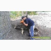 Уборка участков Борисполь.Удаление деревьев