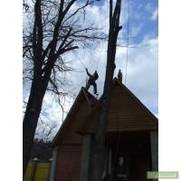 Удаление,Обрезка деревьев.Промышленный альпинизм Киев