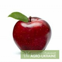Фермерское хозяйство продает сортовое яблоко в Бахчисарайском районе АР Крым.