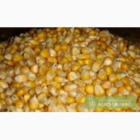 Куплю кукурузу и отход