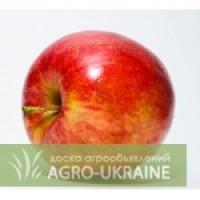 Закупаем яблоки на переработку по Украине с места