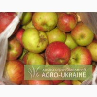 Продам яблоко падалица, оптом, АР Крым