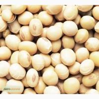 Семена сои Максус CHU 2600, 1-я репродукция