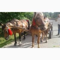 Продам жеребную лошадь