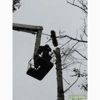 Кронирование деревьев Киев. Обрезка веток. Удаление деревьев Киев