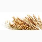 З А К У П А Е М зерновые культуры по всей Украине (опт)