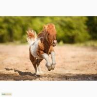 Карликовая лошадка Фунтик