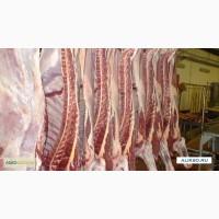 Предлагаем мясо говядины из Украины на экспорт