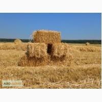 Продам тюки соломи пшениці. Дешево